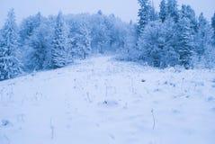 Forêt de l'hiver avec la neige Photos libres de droits