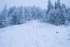 Forêt de l'hiver avec la neige Photos stock