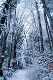 Forêt de l'hiver avec la neige Photo libre de droits