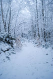 Forêt de l'hiver avec la neige Photographie stock libre de droits