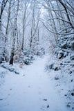 Forêt de l'hiver avec la neige Photo stock