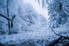 Forêt de l'hiver avec la neige Image stock