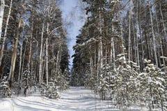 Forêt de l'hiver dans les Monts Oural moyens Images libres de droits