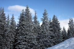 Forêt de l'hiver de Carpathiens en jour du soleil Photographie stock libre de droits