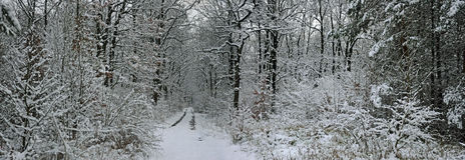 Forêt de l'hiver de conte de fées Photographie stock