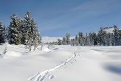 Forêt de l'hiver en montagnes, ski-piste Image libre de droits