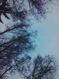Forêt de l'hiver en Russie Photographie stock