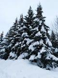 Forêt de l'hiver en Russie photographie stock libre de droits