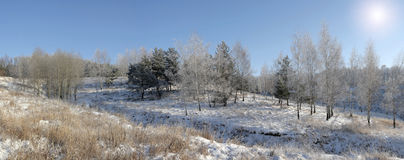 Forêt de l'hiver (panorama) Images libres de droits