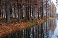 Forêt de l'hiver près du fleuve Photo stock