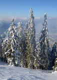 Forêt de l'hiver sur la montagne Images stock