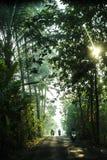Forêt de l'Indonésie Photos stock