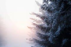 Forêt de la Finlande Photographie stock libre de droits