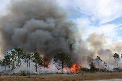 Forêt de la Floride enflammée photos libres de droits
