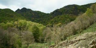 Forêt de La Grevolosa Photos libres de droits