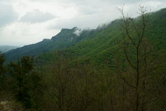 Forêt de La Grevolosa Image stock