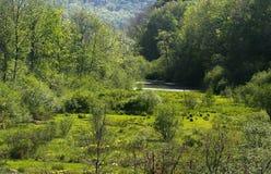 Forêt de la Pennsylvanie Photographie stock
