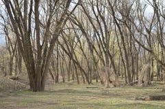 Forêt de la vie Photographie stock