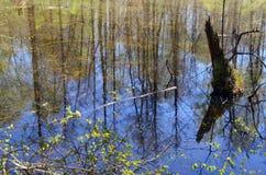 Forêt de lac au printemps Photos libres de droits
