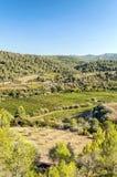 Forêt de Lagrasse Photos libres de droits