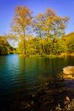 Forêt de Lakeside Images libres de droits