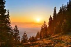 Forêt de lever de soleil Image libre de droits
