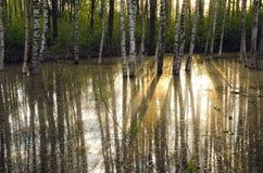 Forêt de lumière du soleil de matin au printemps Photographie stock libre de droits
