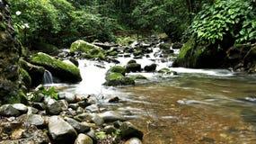 Forêt de mahua Photos stock