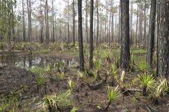 Forêt de marécage au parc d'état de conserve de bayou de Tarkiln en Floride image libre de droits