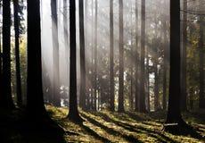 Forêt de matin Photographie stock libre de droits