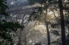 Forêt de matin Photographie stock