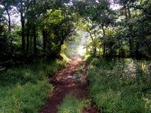 Forêt de matin Image libre de droits