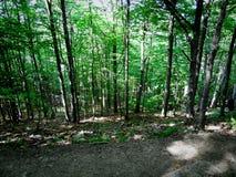 Forêt de matin photo stock