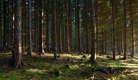 Forêt de matin avec le soleil Image libre de droits