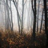 Forêt de matin en brouillard épais photographie stock libre de droits