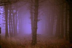 Forêt de matin en brouillard épais images stock