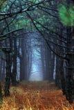 Forêt de matin en brouillard épais image libre de droits
