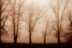 Forêt de matin en brouillard épais image stock