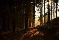 Forêt de matin en brouillard et soleil Photo stock