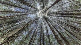 Forêt de merveille Images libres de droits