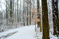 Forêt de Milou Photographie stock libre de droits