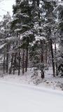 Forêt de Milou Images stock