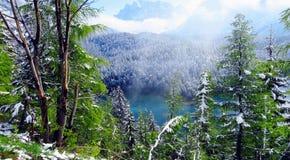 Forêt de Milou Image stock