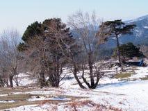 Forêt de Milou Photo libre de droits