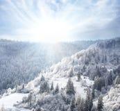 Forêt de Milou couverte dans la neige sur le flanc de coteau Photos libres de droits
