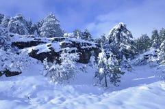 Forêt de Milou en hiver images libres de droits