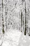 Forêt de Milou, paysage blanc naturel saisonnier Photo stock