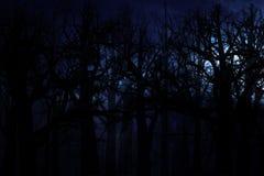 Forêt de minuit Photo stock