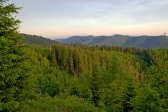 Forêt de montagne Photo libre de droits