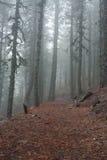 Forêt de montagne Images libres de droits